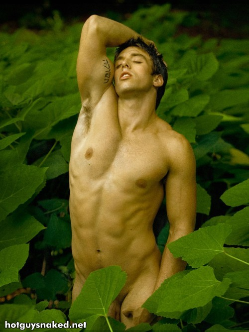 Jungle Fever by David Vance gay